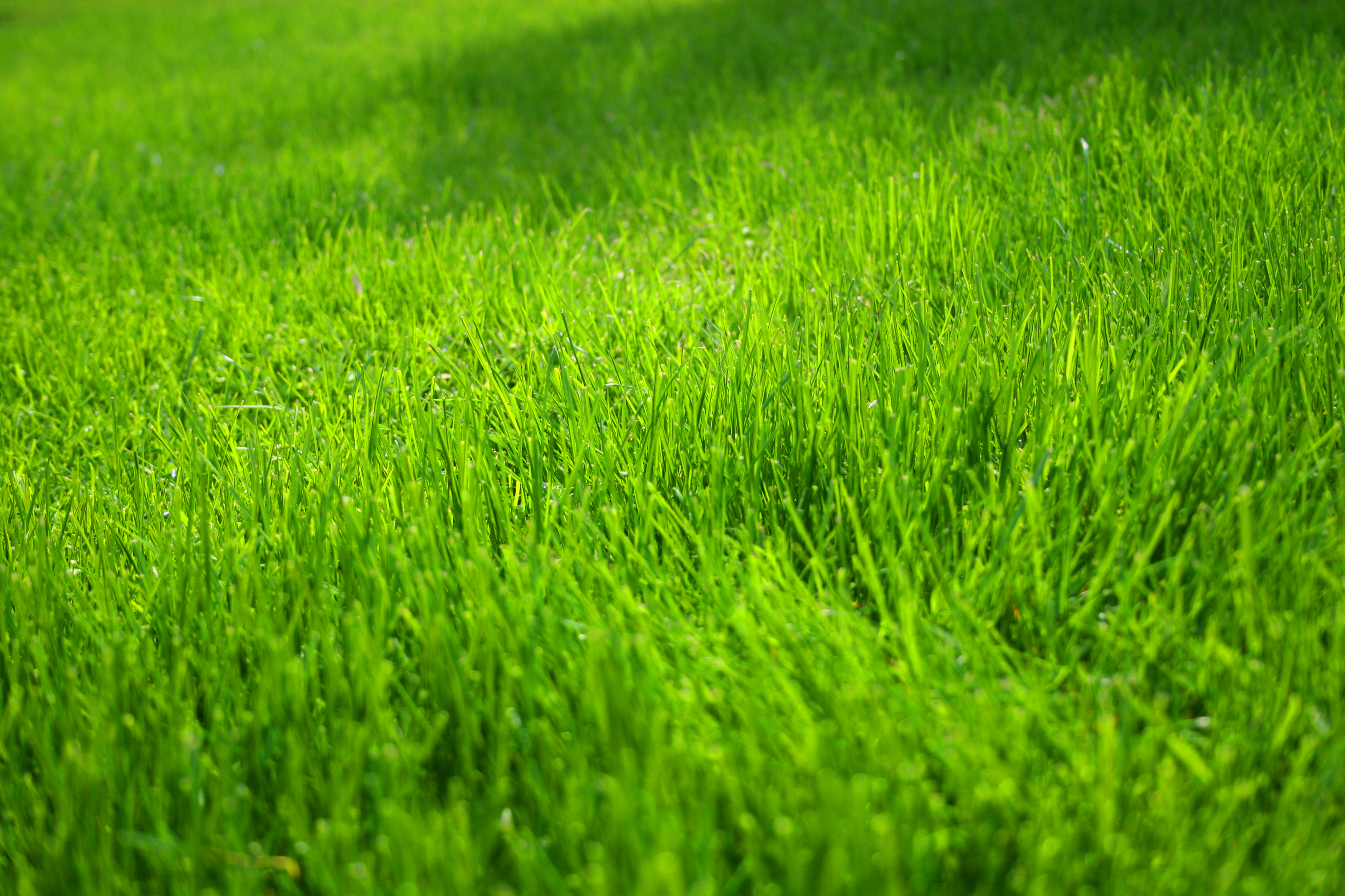 Grass images free wallpaper for Tipos de cesped natural para jardin
